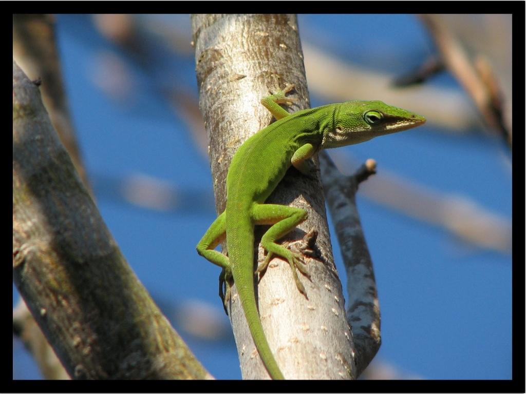Things About Lizards Tango Cheats Com